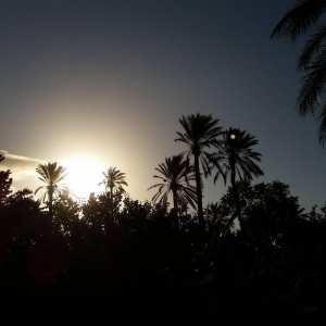 #Tolga, #Biskra :  Une perle de oasis ... !
