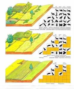 Les champs en monocultures contribuent à l'érosion massive de la biodiversité