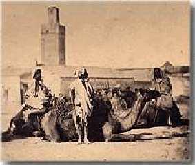 Photo rare d'une caravane de chameaux à Tlemcen