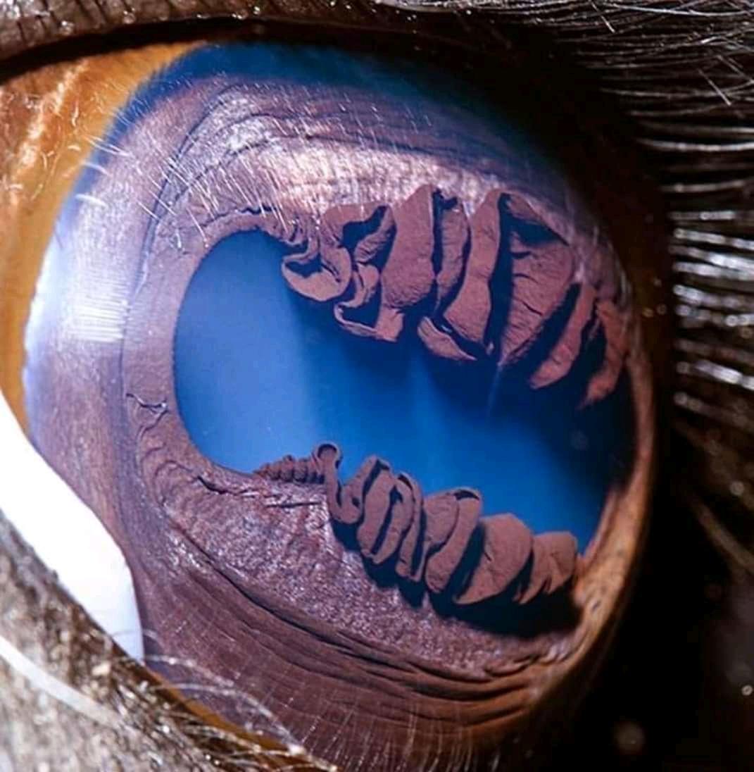 صورة مقربة لعين الجمل