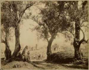 Tlemcen. Marabouts en ruines (Photo rare)