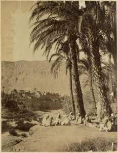 [Groupe d'hommes dans un oasis à El Kantara?] (Photo rare)