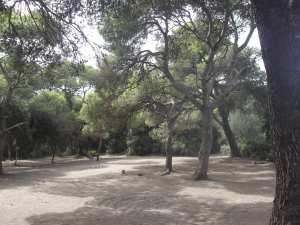 plage-forêt zemmouri