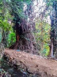 Ain Ben Sari ou Ain Fouara une des sources sur les hauteurs de Tlemcen