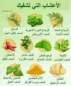 الأعشاب التي تشفيك بإذن الله