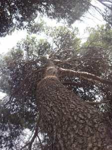 la forêt de Zemmouri