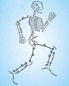 عظام جسم الانسان