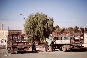 Mekmen Ben Ammar : Nomades de la région de Naama