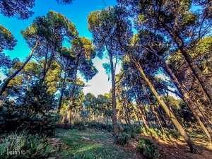 Fôret du petit perdreau (Parc National de Tlemcen)