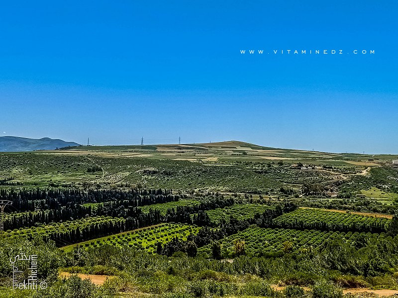 Orangeraies des Beni Ghenam (Commune Emir Abdelkader, Wilaya d'Ain Temouchent)
