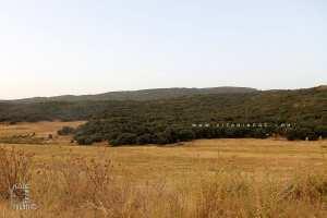 Tlemcen : Lâcher de 8 gazelles de Cuvier et 15 mouflons à manchettes dans la réserve de Moutas