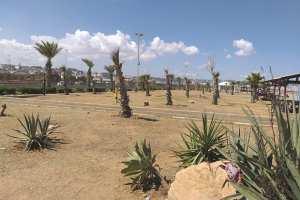 ARRÊT SUR IMAGE - Vu à Alger: Le palmier au lieu d'espèces ombrageuses