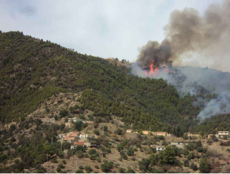 La forêt entre Krima et Ijemati, ravagée par un incendie