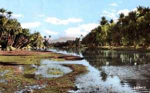 BECHAR- La palmeraie