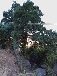 Petit cours d'eau avec un chêne liège dans la forêt de Zarifet