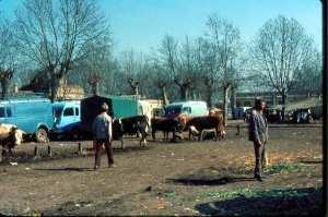 Boufarik-Vente de bétail