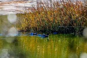Petit lac artificiel à la réserve de Chasse de Moutas