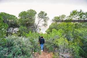Forêt de pinèdes dans la région de L'ile Mokeun (Beni Khellad)