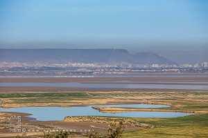 La faune et la flore de la Grande Sebkha d'Oran