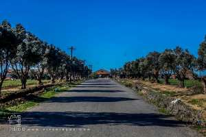 Ferme dite de Djillali aux abords de la Sebkha d'Oran (Commune d'El Kerma)