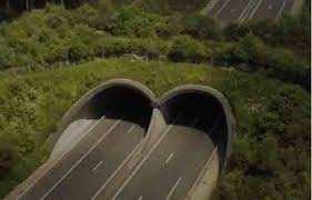 Planète (Europe/France) - Ecoponts, écoducs… Ils permettent aux animaux de traverser l'autoroute en sécurité