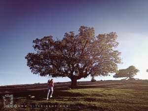 Chêne dans une forêt de Ain Ghoraba