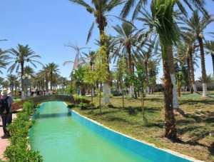 Biskra- palmeraie- jardin des zibans