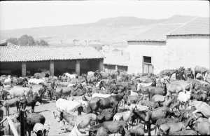 boghari 1950