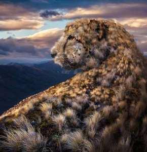 léopard digital art