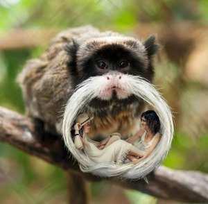 moustache de singe digital art