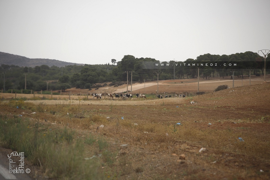 Forêt de Bouhriz (Commune de Amarnas)