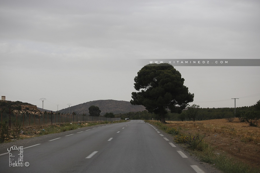 Sidi Bel Abbès : 90 hectares pour la création de forêts récréatives