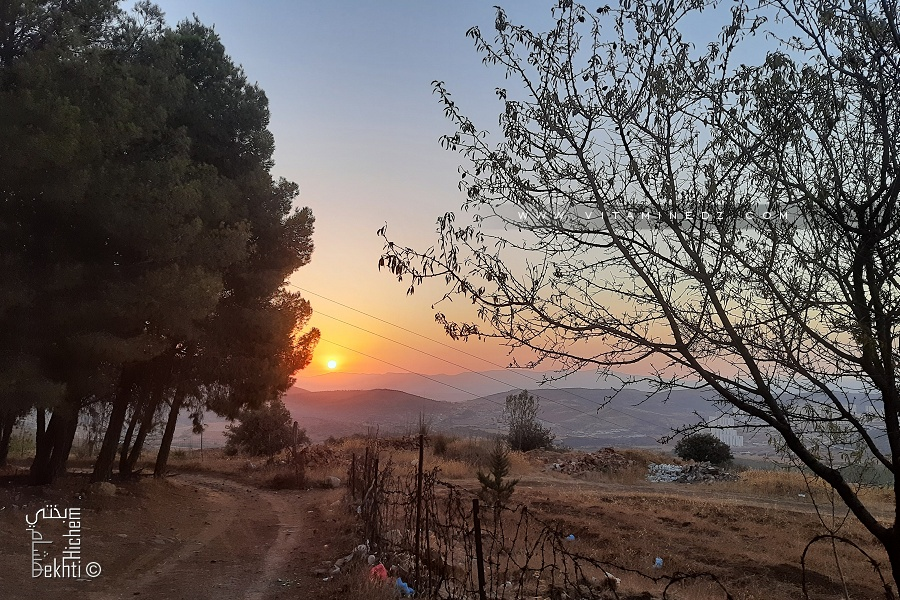 Une piste de randonnée dans une petite forêt de Tlemcen