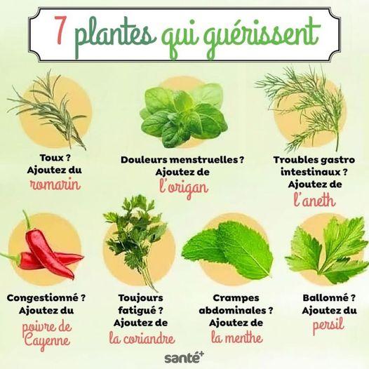 7 plantes qui soignent nos maux !