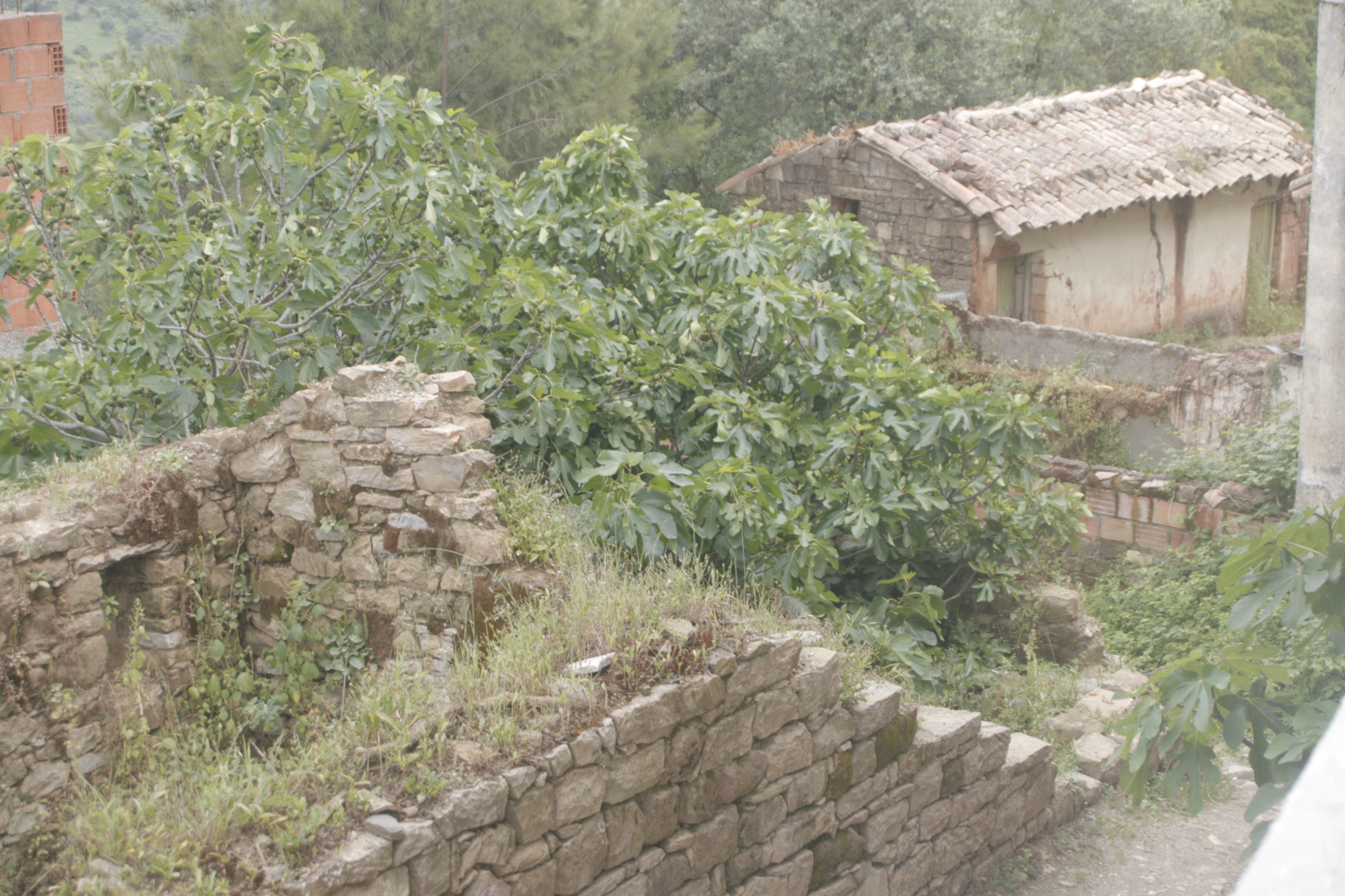 architecture maison kabyle maison moderne