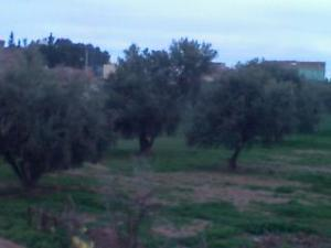 ouzidane,djenane d'olivier