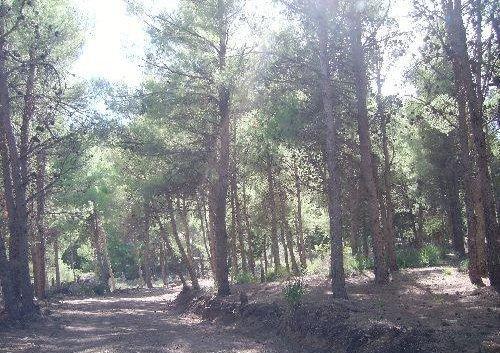 بعض الغابات في ريف مدينتي