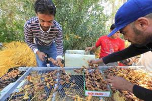 L'exportation des dates algérienne