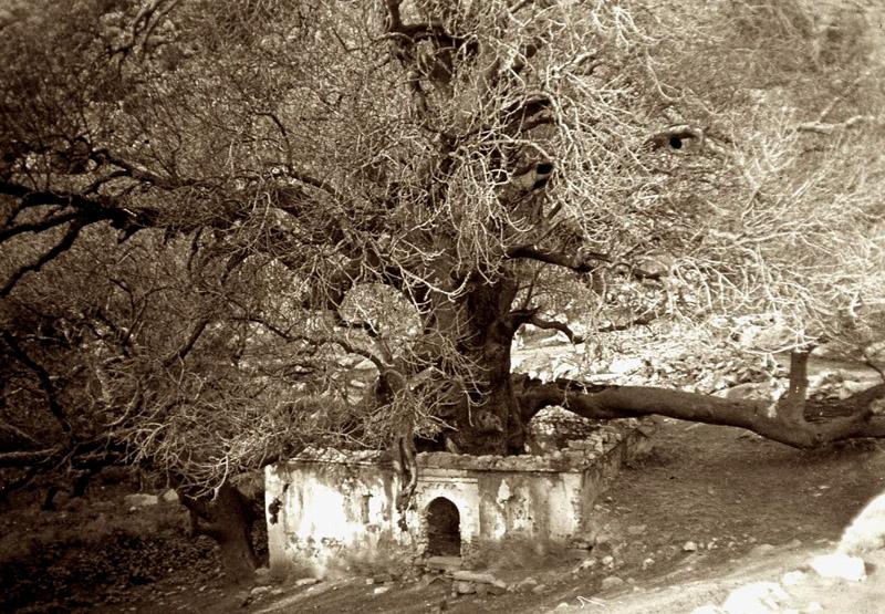 le marabou Sidi Salah-avant 1940