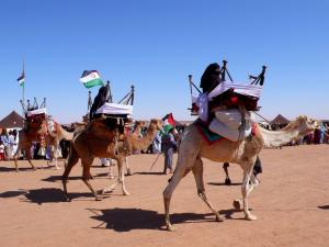 Cortège de chameaux