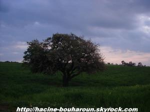 Bouharoun
