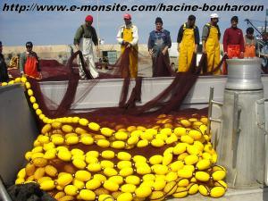 Bouharoun (les pêcheurs)