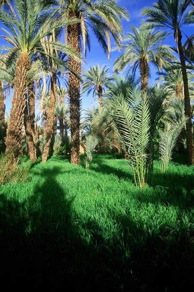 تعرفوا على ولايات الجزائر 48 5202-palmeraie-de-dj