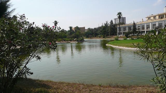 02-50124-jardin-public-d-oran