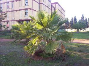 Institut National des Télécommunications (Médéa)