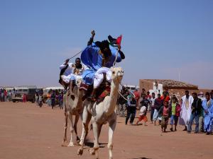 Course de Chameaux à Tindouf