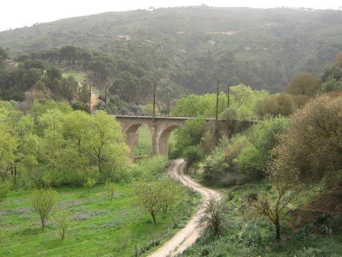 Un Pont de Souk Ahras