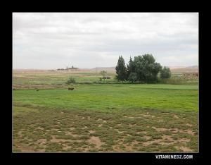 Paturages au bord de Oued Ouark
