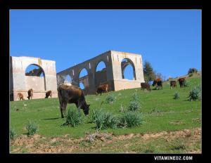 الثروات الطبيعية لمنطقة أحفير (تلمسان)