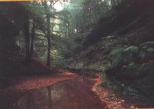 غابة البابور على بعد 70 كم من مدينة سطيف